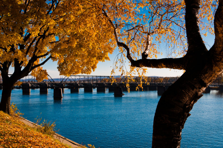tree with orange leaves near a bridge over water